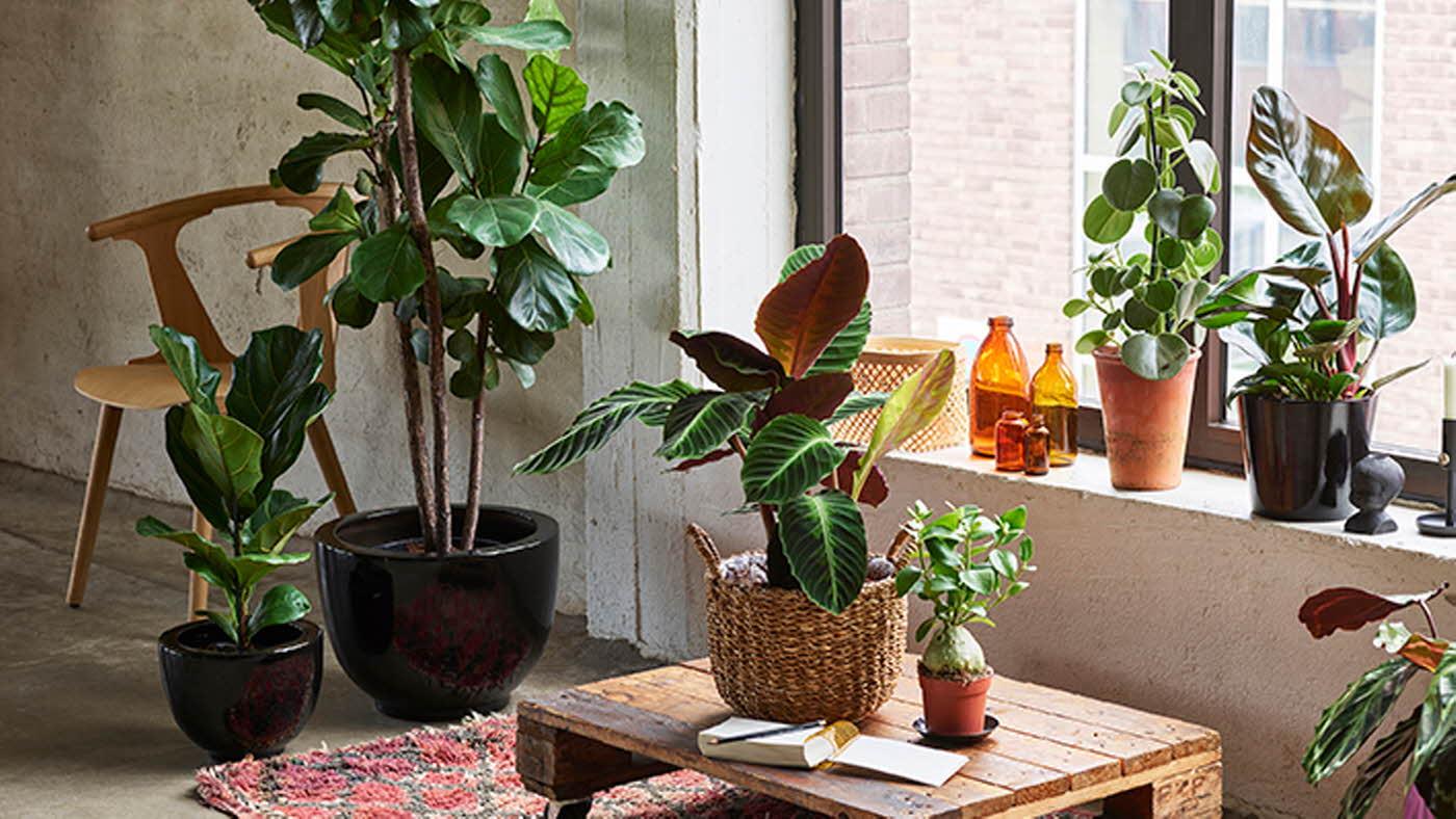 Miljø med grønne planter
