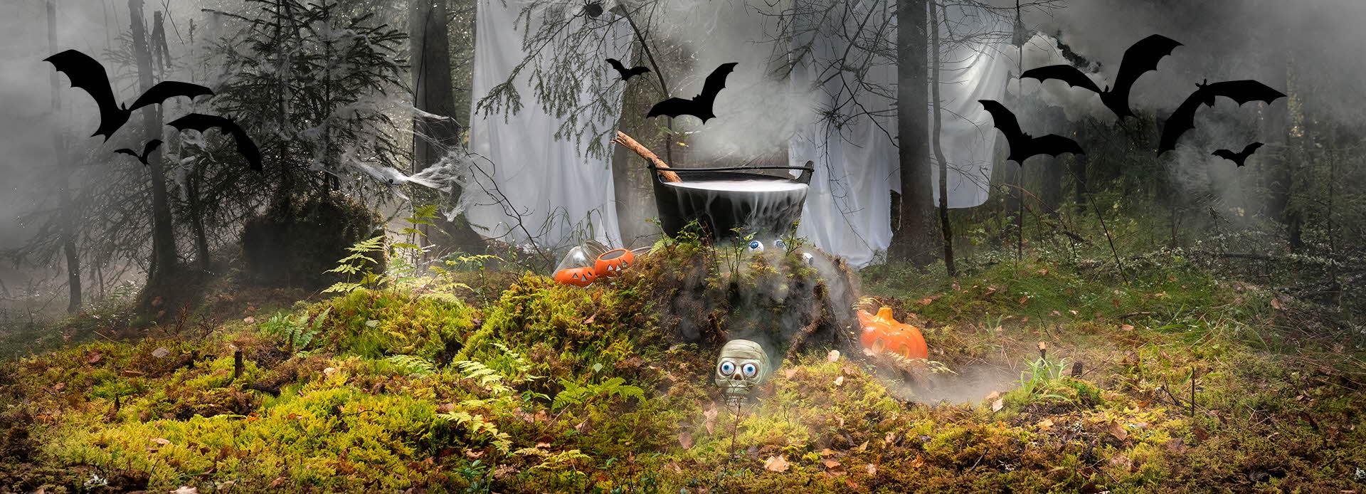 skog i tåke med en stor gryte på en stubbe, flygende flaggermus, hodeskaller og gresskar på bakken
