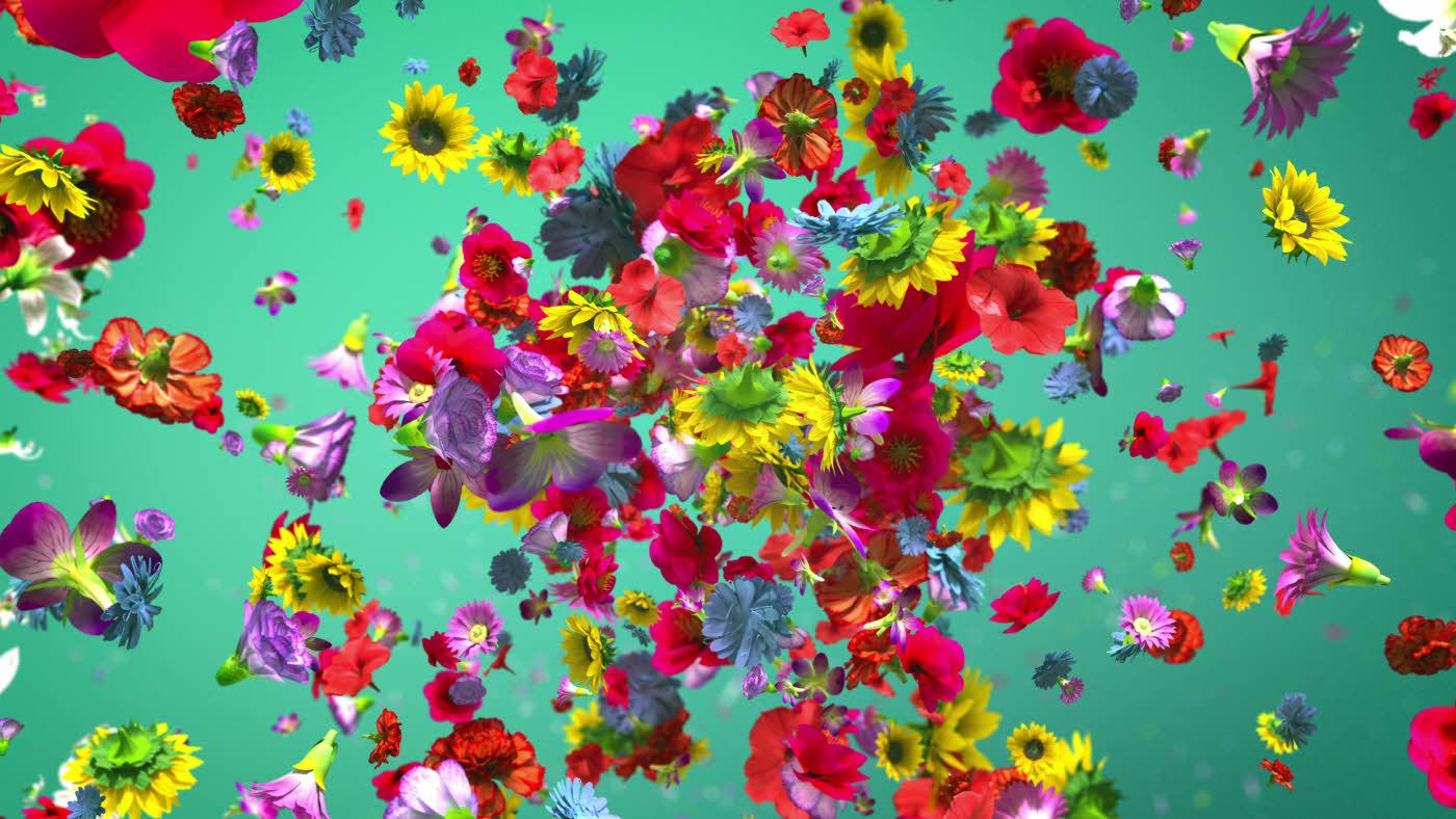 """Blomster som """"eksploderer"""" på turkis bakgrunn"""