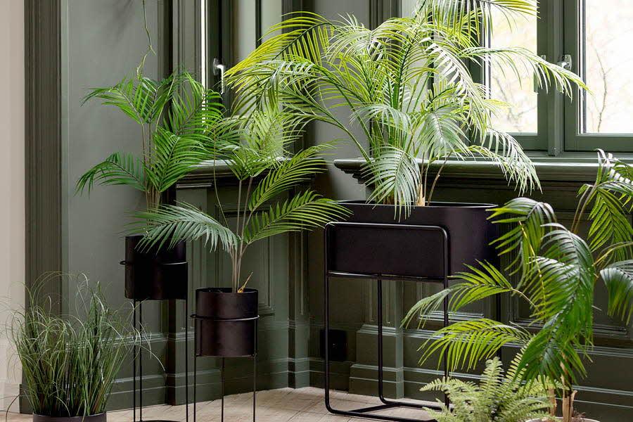 Mengde grønne planter inne på et rom