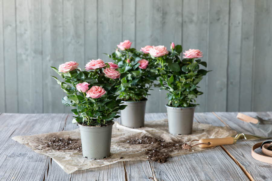 Sommerplanter fra mester Grønn