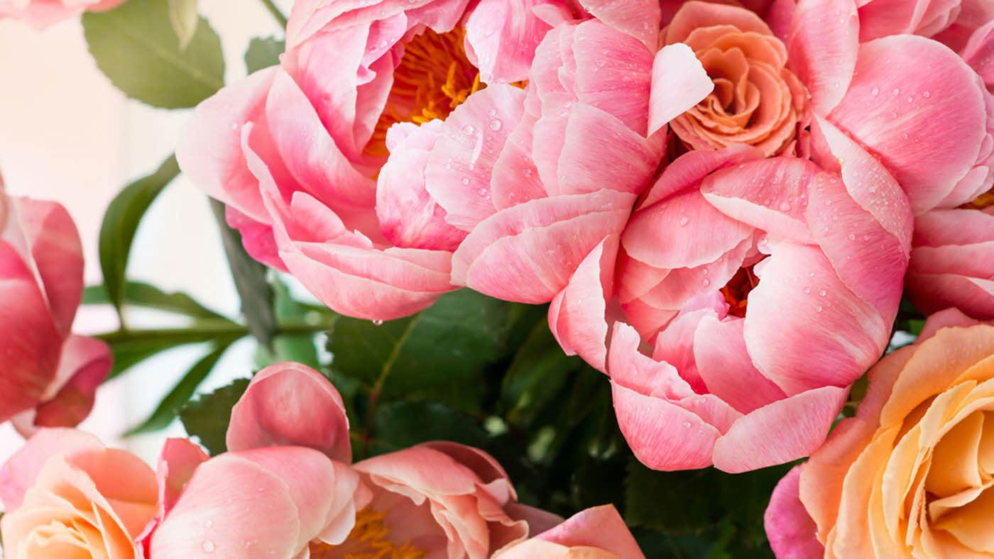 nærbilde av blomsterbukett, peoner