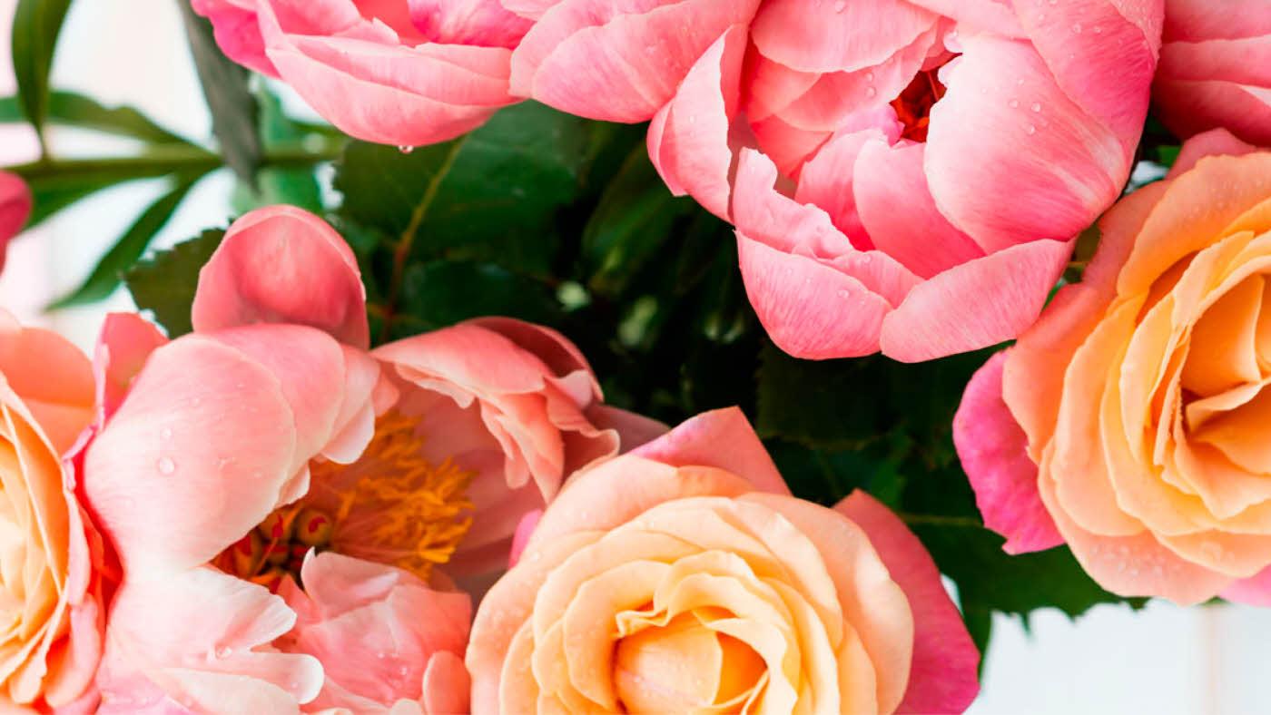 Utsnitt av blomsterbukett med peoner og roser i rosatoner